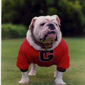 University of Georgia Mascot